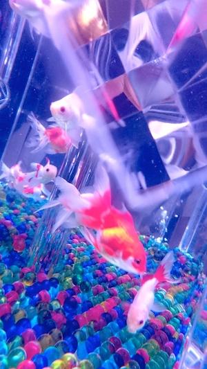 art_aquarium_s.jpg